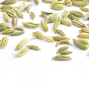 Fennel-01-Crop