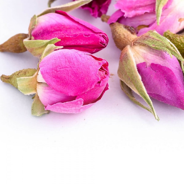 Rose-Buds-01-Crop